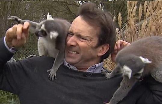 英国记者被猴围攻 猴便利店要怎么