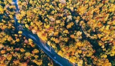 中国森林覆盖率达21.66% 植物造林工作还在继续进行