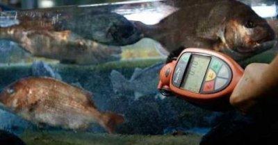 泰国合法进口日本福岛海域水产品 称检测后可以放心食用