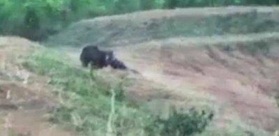 印度男子与熊自拍被咬死 围观者害怕无人敢上前救人