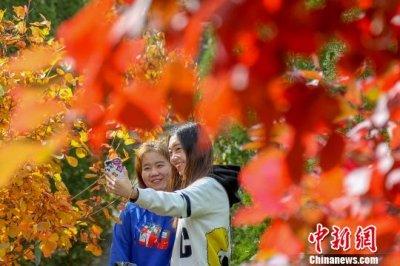 八达岭国家森林公园进入红叶最佳观赏期 将持续到10月底