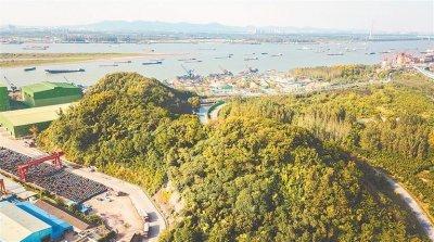 南京雨花台区板桥街道三山矶片区实现九万平方米绿植全覆盖