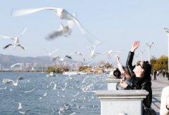 今年云南预计实现旅游总收入8800亿元 接待海外旅游者700万人次
