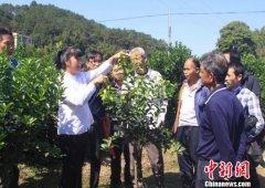 广西40年农村贫困人口减少1800余万 减少到2017年底267万人