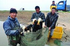村民在灌南县田楼镇境内新沂河淌冬捕