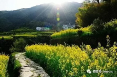 免门票:江西婺源原生态赏油菜花行程线路推荐