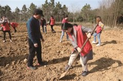 南京白马镇志愿者种下200多株桃树 形成一道靓丽风景