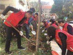南京玄武区红山公园社区两小时种200棵树