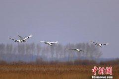 黑龙江双鸭山市宝清县七星河国家级湿地提前10余天迎来今年首批候鸟