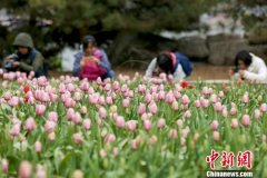 第十届北京郁金香文化节将4月5日至5月6日在北京国际鲜花港举行