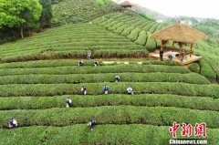 中国溧阳茶叶节开幕 去年茶叶产值15亿元