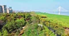 武汉两江四岸今春植树百万株 已完成1.1万亩