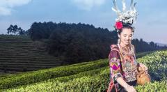 万达丹寨新型扶贫项目改变丹寨县茶农生活现状