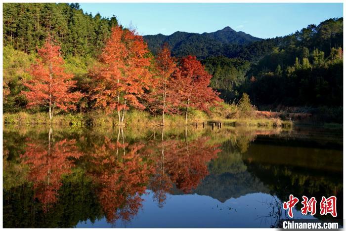 """""""秋染红林""""线路之广东车八岭国家级自然保护区 程景伟 摄"""