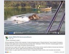 马来西亚一大象游泳横渡湖泊 网友们纷纷感叹大开眼界