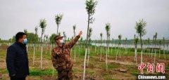 武汉长江大保护植树造林复工 预计今春将植树造林4000亩