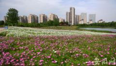 合肥四季花海公园迎来盛花期 欢迎市民前往游玩赏花